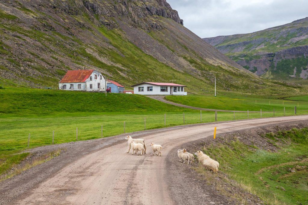 Organizzare un viaggio Low cost in Islanda: itinerario, consigli, mappe e indirizzi utili