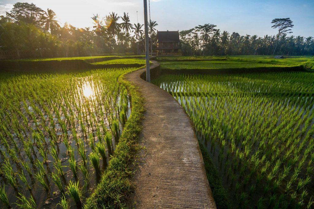 Un classico buongiorno a Bali